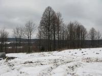 bonarivka_125.jpg