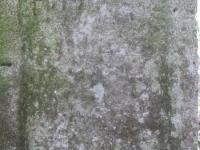 sukha_vola (175)