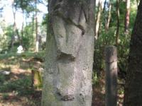 sukha_vola (475)