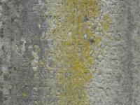Bodaki (229)