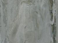 rychwald (3)