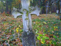 zukow_2006_29